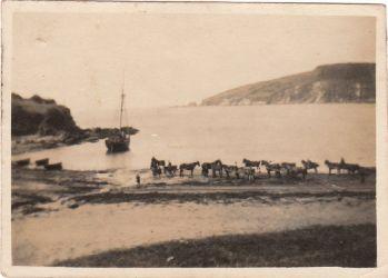 Wonwell Horses